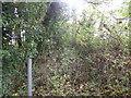 TF0917 : Overgrown path by Bob Harvey