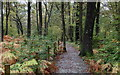 NY3602 : Permissive Path in Pull Garth Wood by Chris Heaton