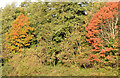 J3876 : Autumn trees, Knocknagoney, Belfast (October 2014) by Albert Bridge