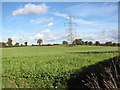 TM2099 : Electricity pylons in brassica crop field by Evelyn Simak