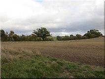SJ4030 : Winter arable by Richard Webb