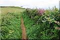 SW6226 : Coastal path on Bullion Cliff by Bill Boaden
