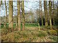 SP0974 : Tree belt, southeast of Fulford Hall by Robin Stott