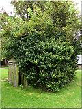 SP1971 : Baddesley Clinton - tree eats shed! by Chris Allen