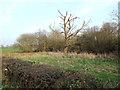 SP0974 : Site of a moat by Rumbush Lane by Robin Stott