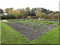 SJ4182 : Vegetable garden, Speke Hall by Richard Hoare