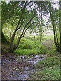 SS6808 : Stream in Great Wood by David Smith