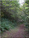 SS6908 : The Tarka Trail in Burrowcleave Wood (3) by David Smith