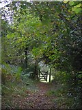 SS6908 : The Tarka Trail in Burrowcleave Wood (5) by David Smith