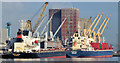 J3576 : Two bulk carriers, Belfast (October 2014) by Albert Bridge