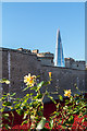 TQ3380 : Poppies at the Tower, London by Christine Matthews