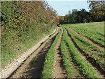 TQ1352 : Hogden lane by Alan Hunt
