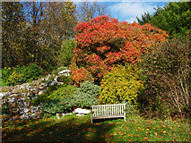 TQ1352 : Cotinus, Polesden Lacey by Alan Hunt