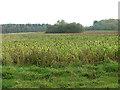 TF9017 : Crop fields east of Beeston Road by Evelyn Simak