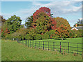 TQ0652 : Hatchlands Park, autumn colour by Alan Hunt