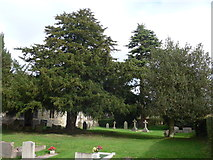 SU0460 : St Andrew, Etchilhampton: churchyard (3) by Basher Eyre