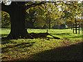 TQ0652 : Autumn sunshine, Hatchlands Park by Alan Hunt