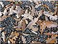 TF0727 : Fallen Leaves by Bob Harvey