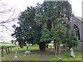 TF0627 : Churchyard Trees by Bob Harvey