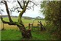 NX1045 : Stile at Ardwell Garden by Billy McCrorie