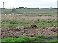 NZ1753 : Field at Harperley Hall Farm by Oliver Dixon