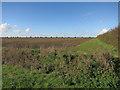 TL4064 : Field by Longstanton Road by Hugh Venables
