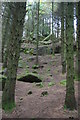 SX6787 : Gidleigh Tor through the woods of North Park by Christopher Hilton