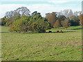 TQ0651 : Fuller's Farm, Hatchlands by Alan Hunt