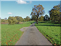 TQ0651 : Estate road, Hatchlands Park by Alan Hunt