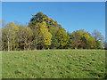 TQ0752 : Autumn colours, Hatchlands Park by Alan Hunt