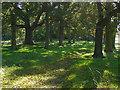 TQ0752 : Shady glade, Hatchlands by Alan Hunt