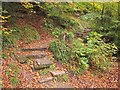 ST6376 : Autumn steps by the Frome by Derek Harper