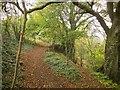 ST7593 : Cotswold Way above Wotton-Under-Edge by Derek Harper