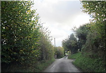 SO9575 : Fairfield Swan Lane by Roy Hughes