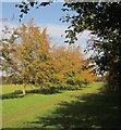 ST5674 : Community Forest Path by Derek Harper