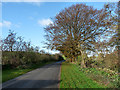 NY5151 : Country lane at Hallfield by Oliver Dixon
