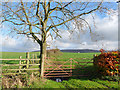 NY5152 : Gate, tree and fields at Moss Foot by Oliver Dixon