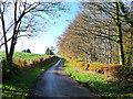 NY5255 : Country lane near the Flatt Farm by Oliver Dixon