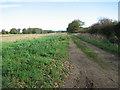 TF8523 : Track into fields beside Low Street by Evelyn Simak