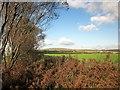 SX3768 : Farmland by the A388 by Derek Harper