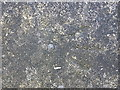 SJ6808 : OS rivet - Lawley bank, subway wall by Richard Law