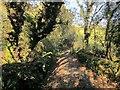 SX3969 : Crossing the Mill Leat by Derek Harper