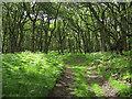 SO1346 : Coed y Garth by Hugh Venables