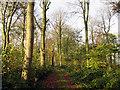 SE9464 : Track  through  Avenue  Wood by Martin Dawes