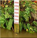 J3673 : Depth marker, the Knock River, Orangefield Park, Belfast (November 2014) by Albert Bridge