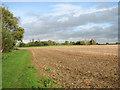 TG3100 : Fields by Bergh Apton by Evelyn Simak
