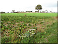 TG3100 : Fields beside the footpath by Evelyn Simak