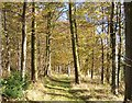 NU1823 : Woodland path by David Chatterton
