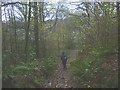 SD3094 : Footpath through Machell Coppice by Karl and Ali