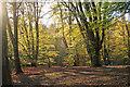 TQ4398 : Sunlit  beeches near Furze Ground by Roger Jones